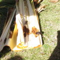 CRB coconut damage Hickam 5090