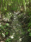 Tripler stream near ponds 5819