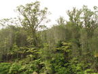 Wailuku mixed forest
